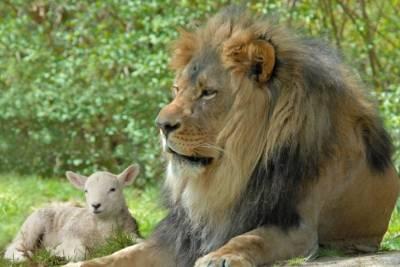 b2ap3_thumbnail_Jumalan-Pojan-valtakunta.jpg