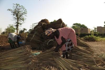 Naiset kokoavat hirssiä Senegalissa