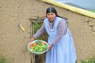 Bolivian Andeilla kasvavat tomaatit uusissa kasvihuoneissa