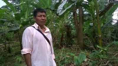 ruokabanaaniviljelmä elpyy tulvan jäljiltä Kolumbiassa